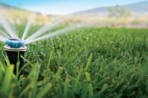 Irrigation Repair & Installation Las Vegas